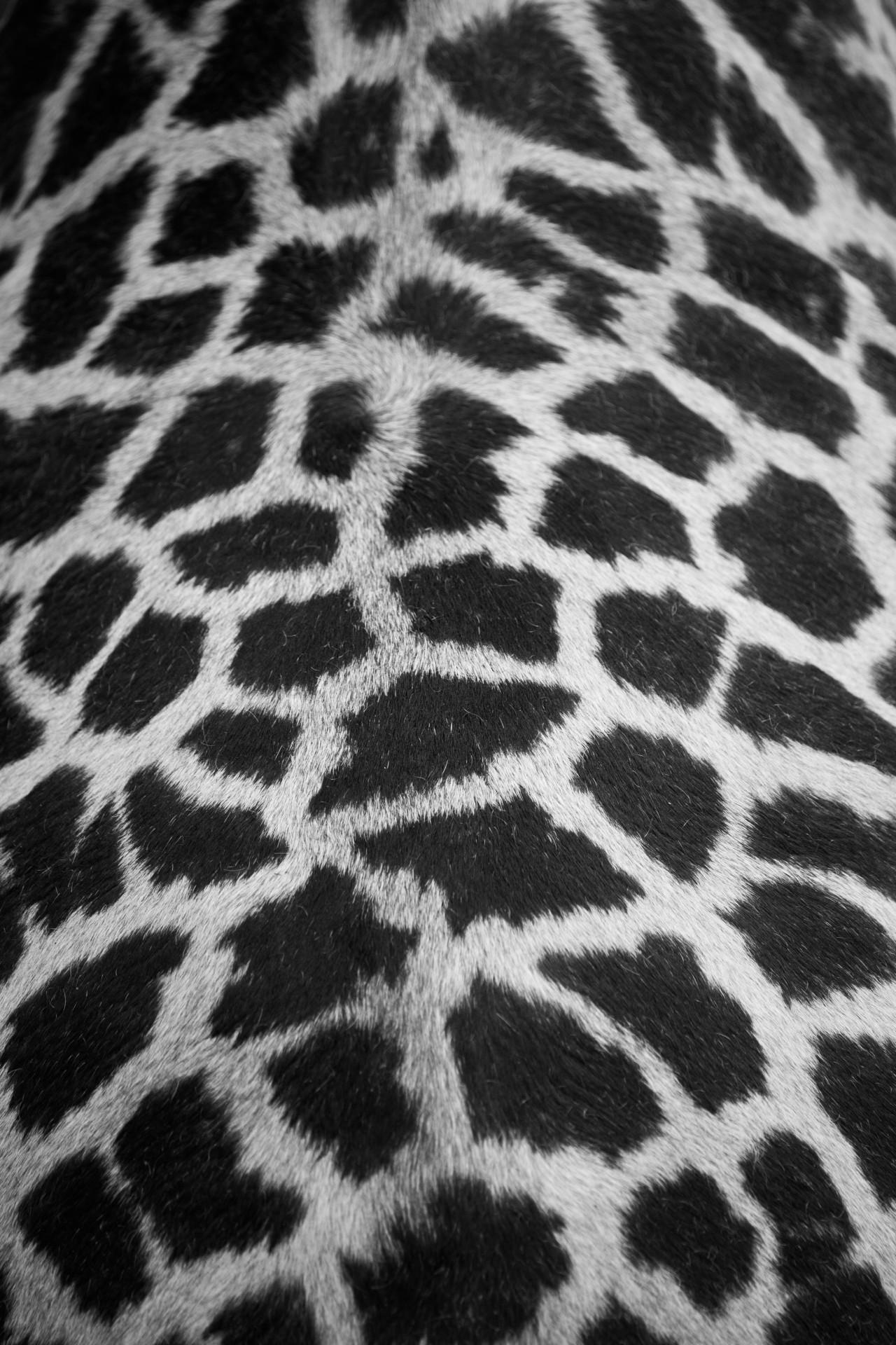 content/images/img-19-20/programme/chapitre-3/giraffe-skin-pattern-14425725159QM.jpg